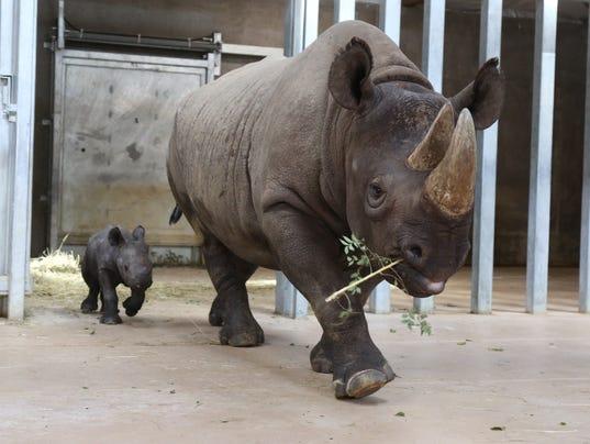 rare rhino born at Blank Park Zoo