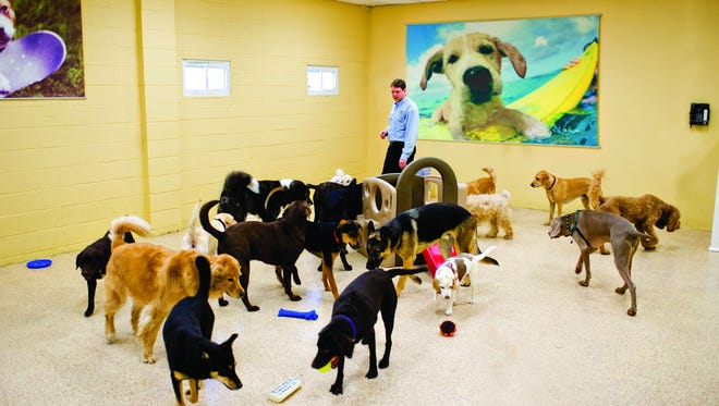 Fanwood-based K-9 Resorts Daycare & Luxury Hotel has secured a multi-million dollar investment for expansion. The Industry-leading dog boarding franchise nationwide growth will be fueled by Navigator Partners.