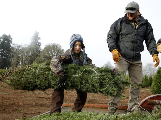 Wyatt Hitz, 9, lifts a Christmas tree that's as big as he is as his father, Matt Hitz, watches while at a tree farm in Silverton, Oregon, on Saturday, Nov. 18, 2017.