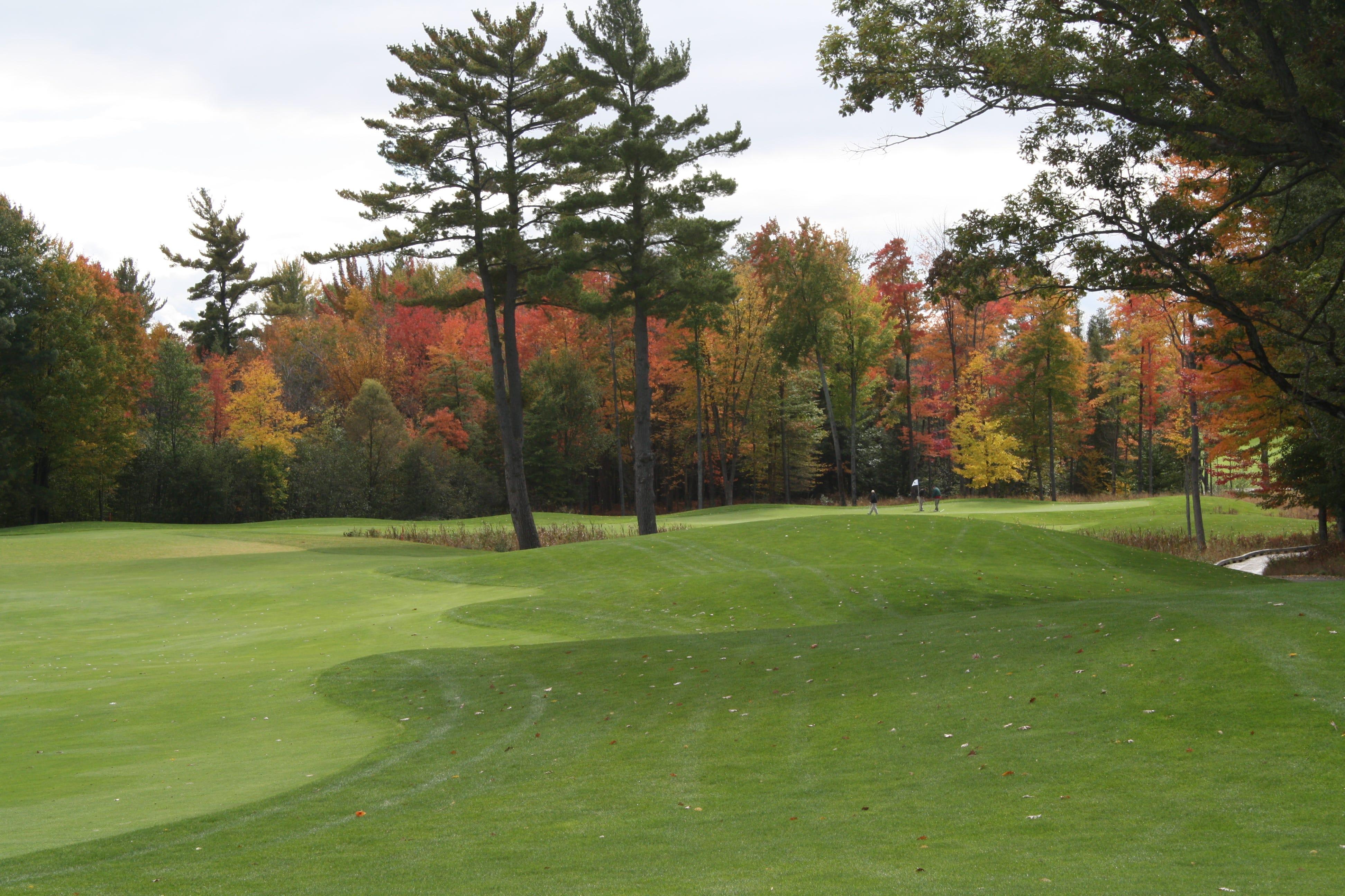 Typical amateur golfers scores