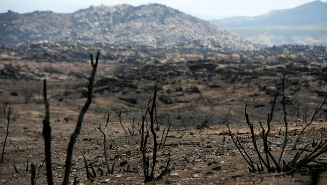 Burned vegetation is seen in front of a burned hill on Tuesday, July 23, 2013, photographed from the site where 19 firefighters died fighting the Yarnell Hill Fire on June 30, 2013.