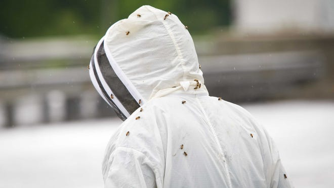 Bees cling to beekeeper Pete Bell as he to collects bee hive containers scattered along Interstate 95 near Newark on May 21, 2014. A legal case is over a flatbed tractor-trailer hauling 460 hives of honeybees that overturned on the Del. 895.