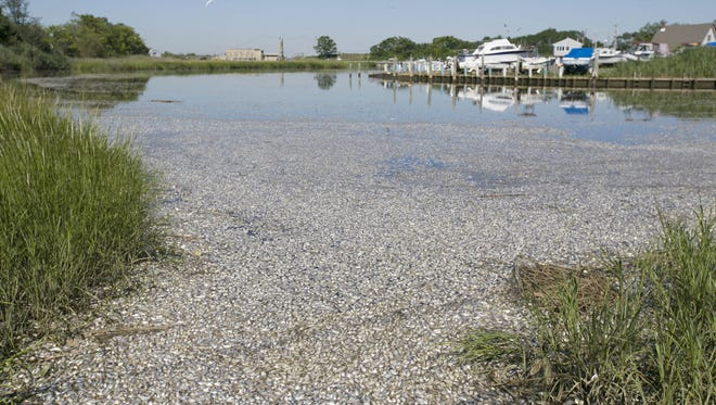 A massive fish kill in the Waackaack Creek in Keansburg on Tuesday resulted in a foul odor that has permeated the area.