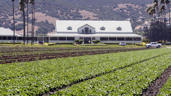 Tanimura & Antle headquarters, south of Salinas
