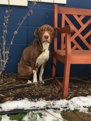 Winston the dog was founded abandoned in Pontiac