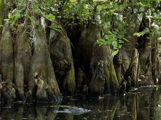 Florida Panther National Wildlife Refuge.jpg