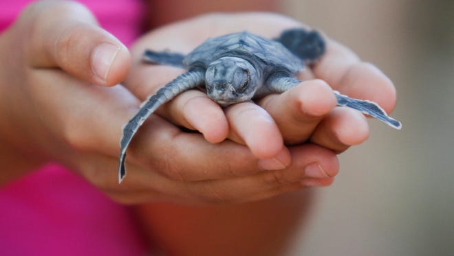 A community member holds a sea turtle hatchling in Nicaragua.