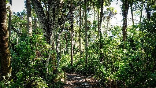 Guided hikes in St. Lucie County.