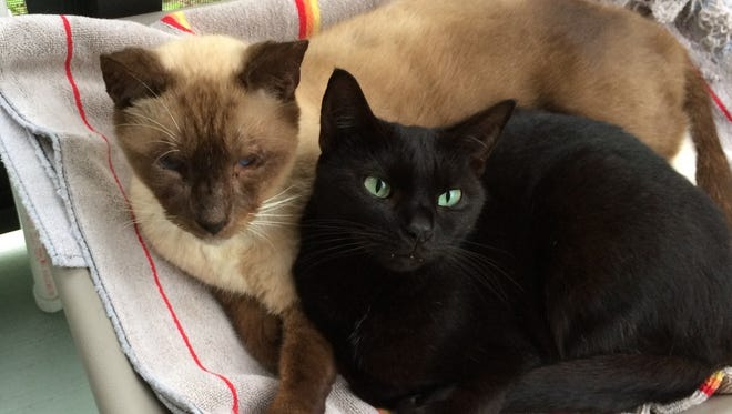 Green-eyed Kiki is much younger than Frankie but is absolutely infatuated with her older man.