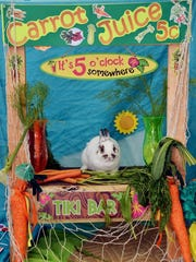 Your rabbit can get a glamour shot at the Southeast Bunfest in Stuart June 2.