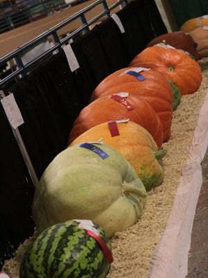 go knoxville file Events at the Jacob Building include agriculture contests that showcase giant pumpkins and melons.