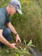 Volunteer Bob Turnbull helps to plant wildflowers at