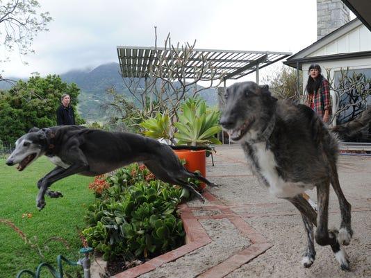 greyhound-rescue-closes-10.jpg