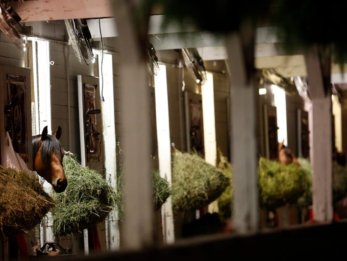 A horse watches from his stall in Randy Morse's stable
