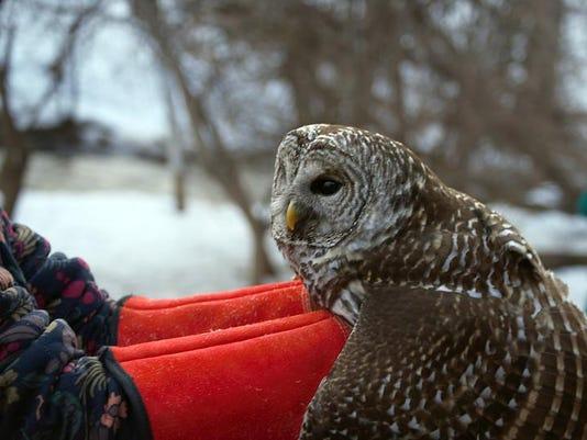 -APC zimmer nature calling owl released LEAD.jpg_20140324.jpg