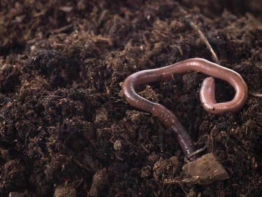 APC f FF family garden earthworms 0614