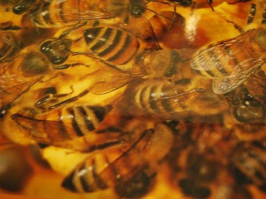 -buzz-28-c3.jpg_20100722.jpg