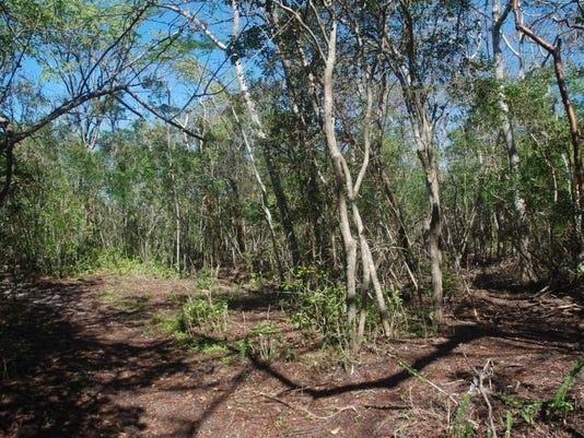 Mound Key Trees3.jpg