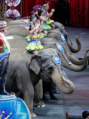 Asian elephants are seen on stage during a final farewell as they perform for the final time in the Ringling Bros. and Barnum & Bailey Circus, Sunday, May 1, 2016, in Providence, R.I. The circus closes its own chapter on a controversial practice that has entertained audiences since circuses began in America two centuries ago. The animals will live at the Ringling Bros. 200-acre Center for Elephant Conservation in Florida. (AP Photo/Bill Sikes)