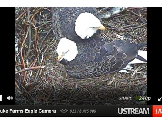 635626433865686200-EagleCam-2parents2