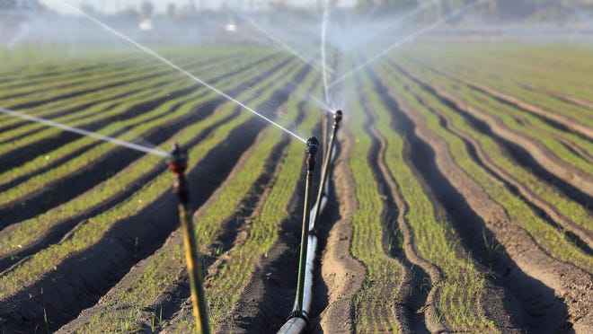Sprinklers run on a farm in the eastern Coachella Valley.