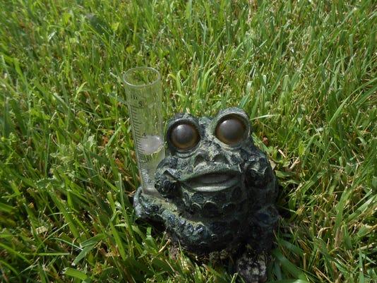 636650202581803884-NEW-garden-frog-DSCN1147.jpg