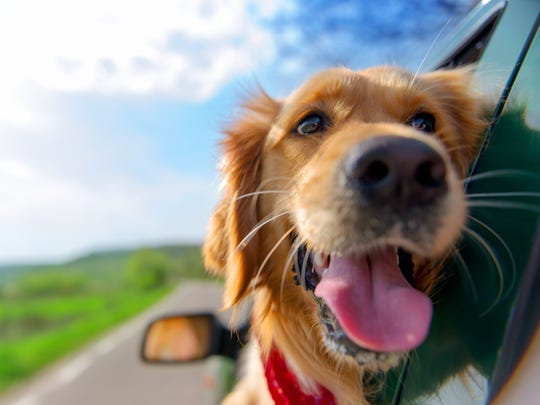 Traveling with pets? There are a few things to know.