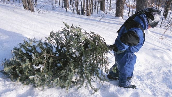 A child helps his family load up a Christmas tree cut on Dixie National Forest property.