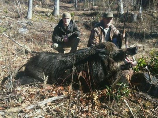 Bruce Florence, right, of Caswell County, shot this 707.5-pound wild hog in Transylvania County Jan. 16. The pig measured 7 feet 4 inches from snout to tail. His son, Jonathan Florence, flushed the animal out of a laurel thicket.