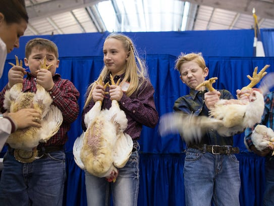 FFA and 4-H members show chickens during the first