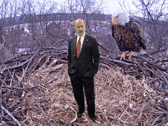 Would a Gov. Wolf cam be as popular as the eagle cam showing a livestream of a pair near Codorus State Park?   Photo Illustration by Samantha Dellinger