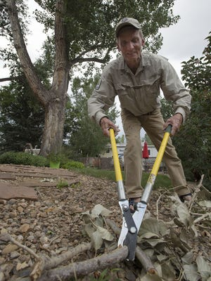 Fort Collins resident Jim Henricksen uses a pair of bypass loppers to break down a branch that recently fell from one of the two large cottonwood trees in his backyard, Wednesday, July 26, 2017, in Fort Collins, Colo.