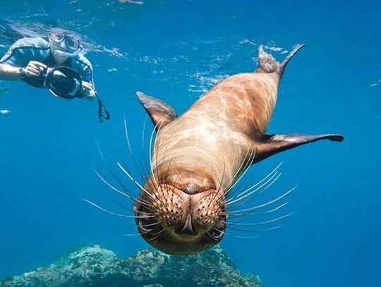 The Galapagos Islands are home to many different species