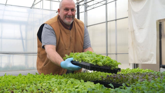RecoveryPark President and CEO Gary Wozniak working in the pilot greenhouse in Waterford in March 2015.