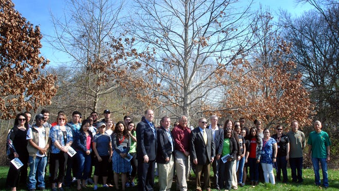 The Basking Ridge white oak tree, believed to be one of the oldest trees in North America.