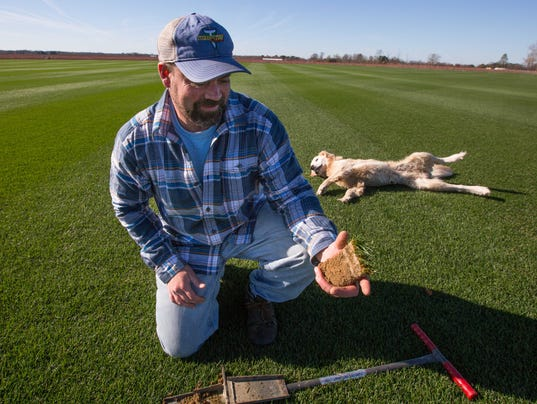 At Tuckahoe Turf Farms Sod Is In The Details