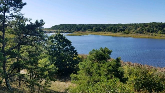 Jacqualyn Fouse, of Wellfleet, has donated 18.5 acres of land overlooking the Herring River estuary above the Chequessett Neck Road dike to the Wellfleet Conservation Trust.