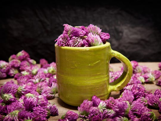 In early accounts of European herb lore, the flowers and seeds were boiled together and applied topically to boils and growths.