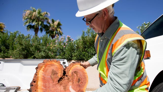 Adkins carries a chunk of eucalyptus tree that his crew cut down along 64th Street. The tree was damaged by a recent monsoon storm.
