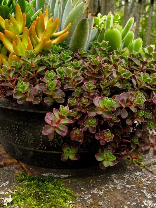 Gardening-Saving Container Plants (2)