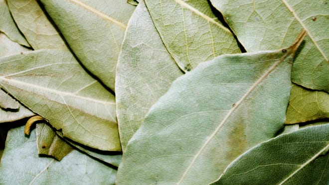Dried bay leaves are long lasting and aromatic source of natural non-toxic pest control in the kitchen.