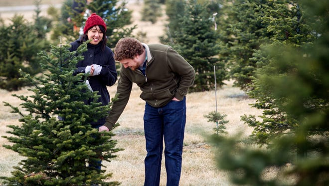 Malcolm Rosenthal, right, and Jackie Sojico look for their Christmas tree at Spilker's Pineridge Tree Farm in Lincoln, Neb.