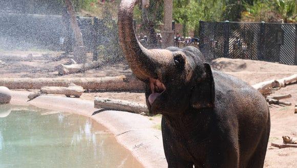 July 20, 2013 - Reba, the zoo's Asian elephant, enjoys