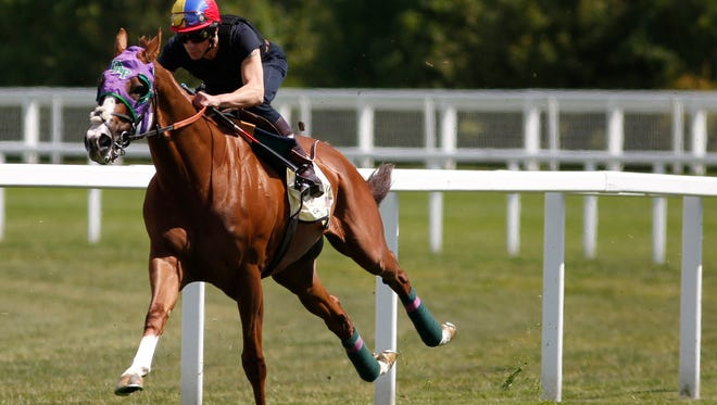 ASCOT, ENGLAND - JUNE 04:  Frankie Dettori riding California Chrome (R) turn right into the straight in a gallop prior to racing at Royal Ascot at Ascot racecourse on June 04, 2015 in Ascot, England. (Photo by Alan Crowhurst/Getty Images) *** Local Caption *** Frankie Dettori;California Chrome