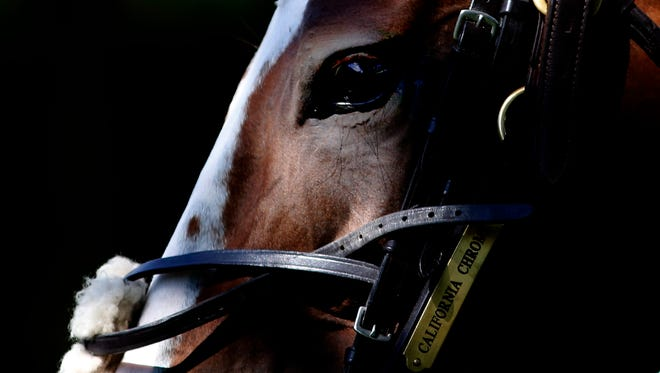 California Chrome at Ascot racecourse on June 04, 2015 in Ascot, England.