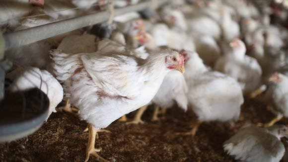 The bird flu virus spread through 15 states in 2015,