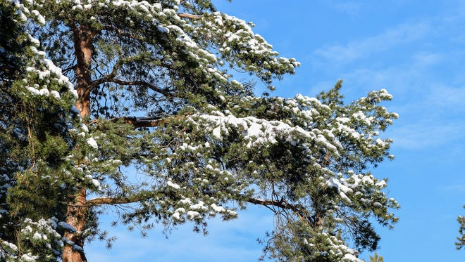 Temperatures have risen, snow has melted and the tree pollen has arrived ahead of schedule.