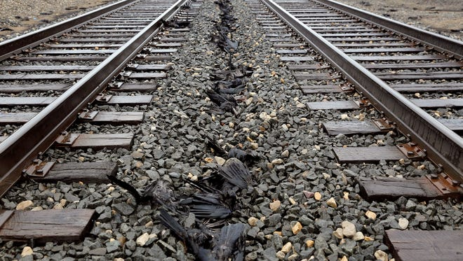 Dozens of dead crows lie on the Amtrak rail lines in Springfield, Mich.