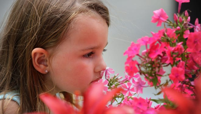 Three year old Avery Aglett, of Dover, Delaware, smells a flowering plant for sale at the West Allis Farmers Market Thursday, July 7, 2016, in West Allis, Wisconsin. Avery is in town visiting her Grandfather.
