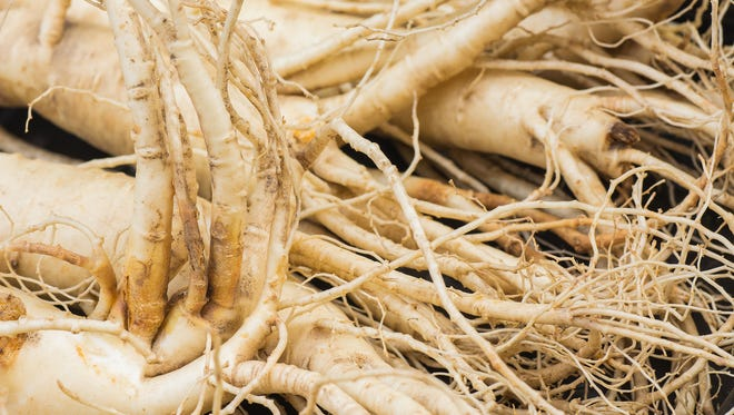 Dry ginseng roots